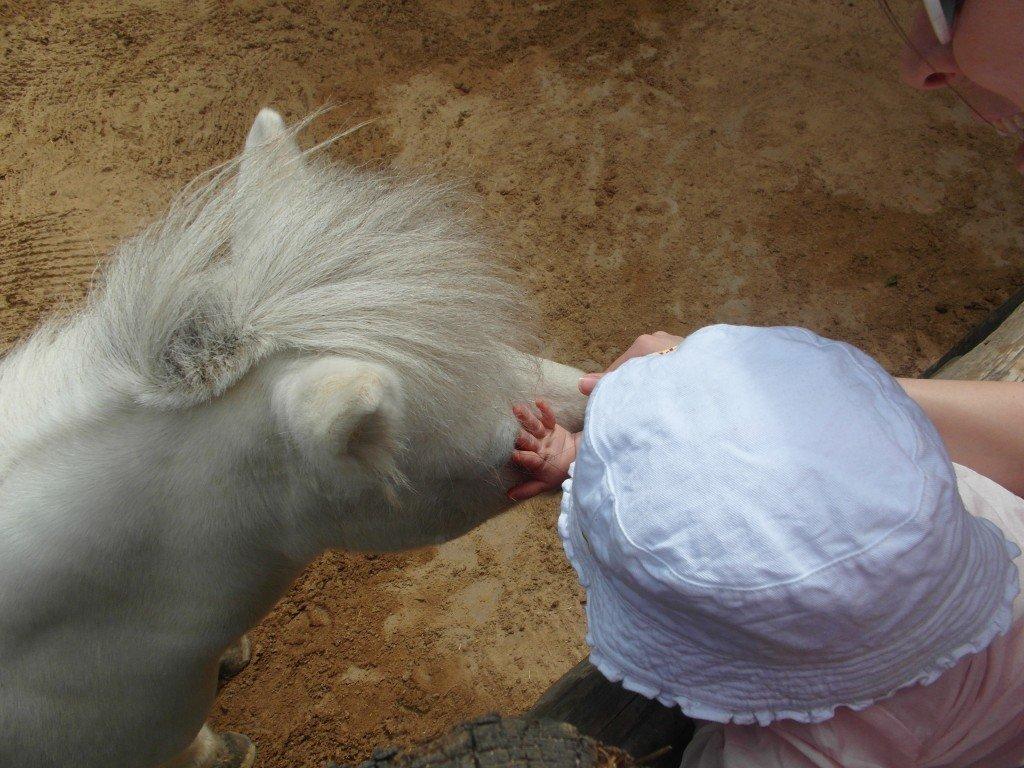 Ponnyn ville gärna bli klappad.