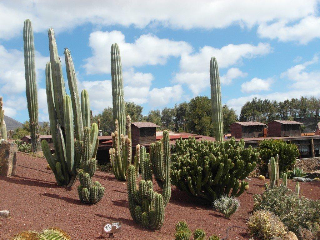 Kaktusar fanns det gott om.