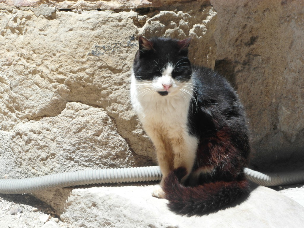 En av många katter på Castelo de Sao Jorge.