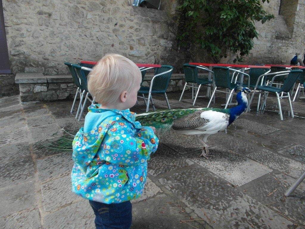 Påfågeln ville inte bli klappad, konstigt nog...