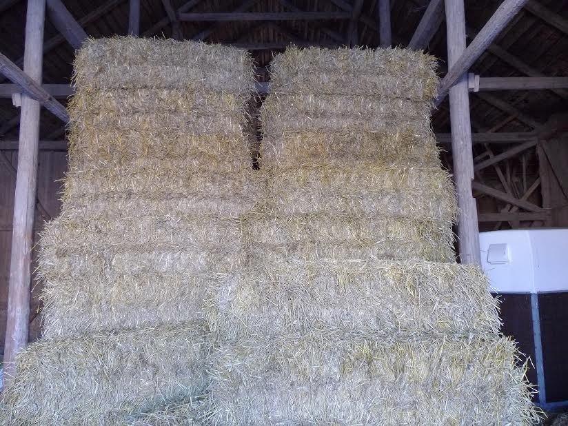65-kilosbalar räcker länge till kaniner...