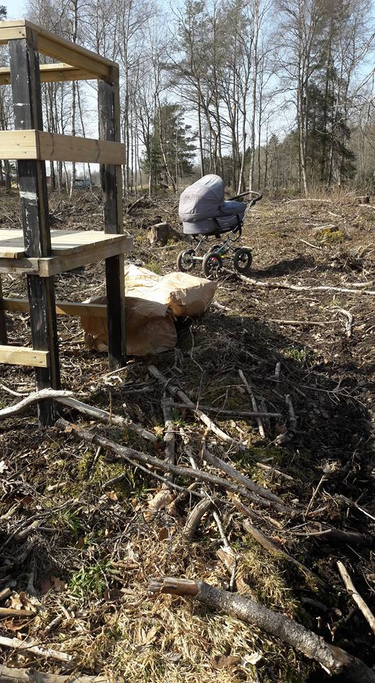 skogsplantering Astrid
