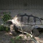Parken Zoo, Eskilstuna, Sköldpadda