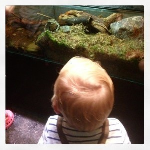 Mammablogg, Aquaria