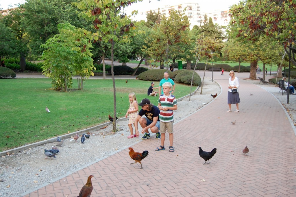 benalmadena_torremolinos_birds_park_rabbit