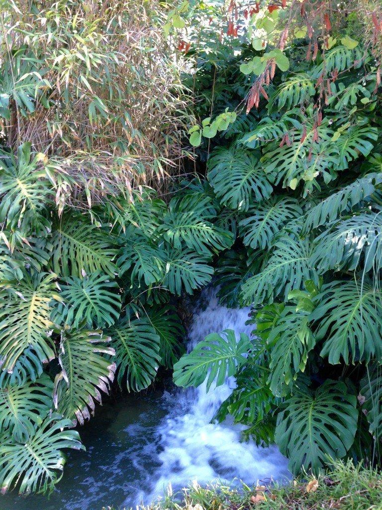 monstera_vattenfall_benalmadena_torremolinos