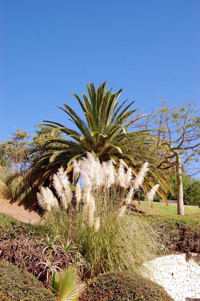 benalmadena_torremolinos_costa_del_sol_palm_park