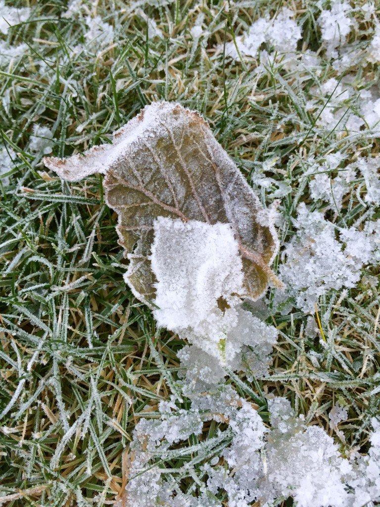 frost_frostbiten_kallt_vinter