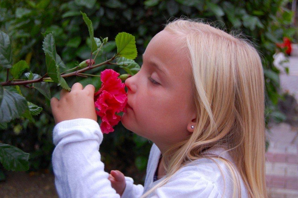 hibiskus_benalmadena_spain_spanien_torremolinos