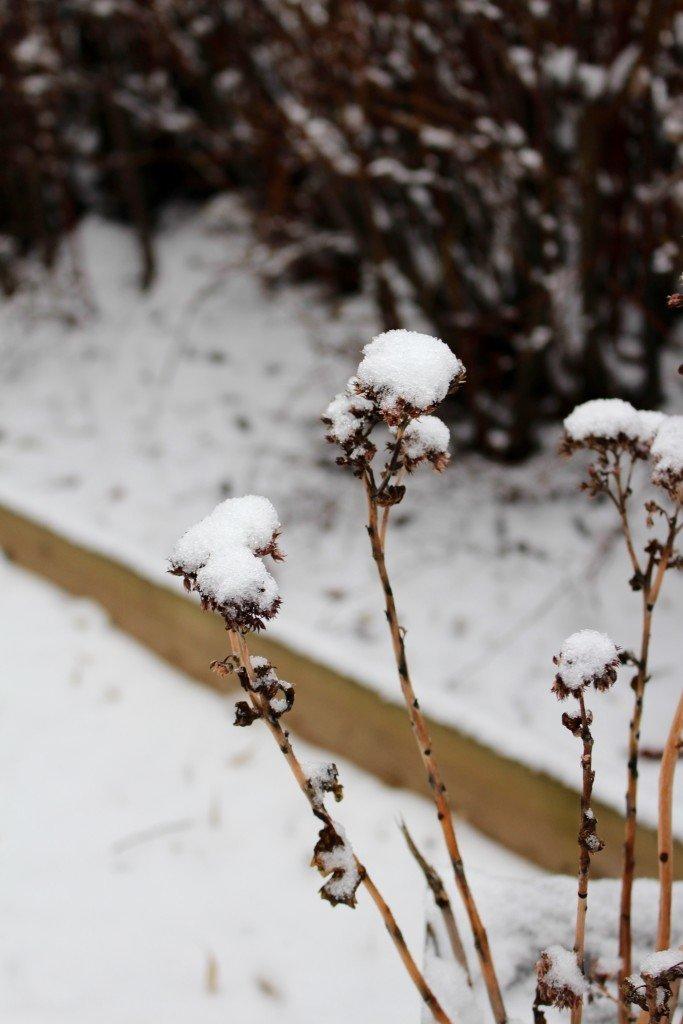 karleksort_snotyngd_winter_wonderland