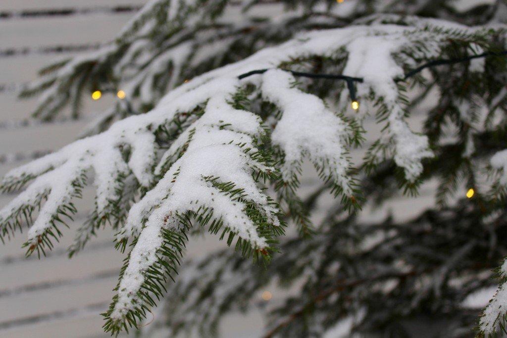 snotyngda_granar_winter_wonderland_vinter_i_skane