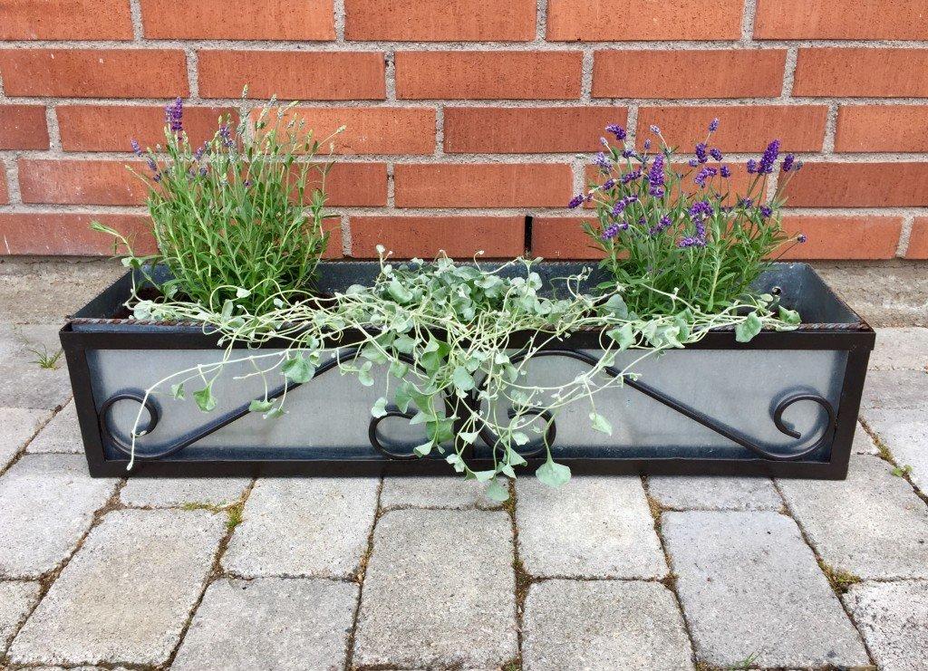 blomsterlåda_smide_zink_konstsmide_lavendel_silverplattar