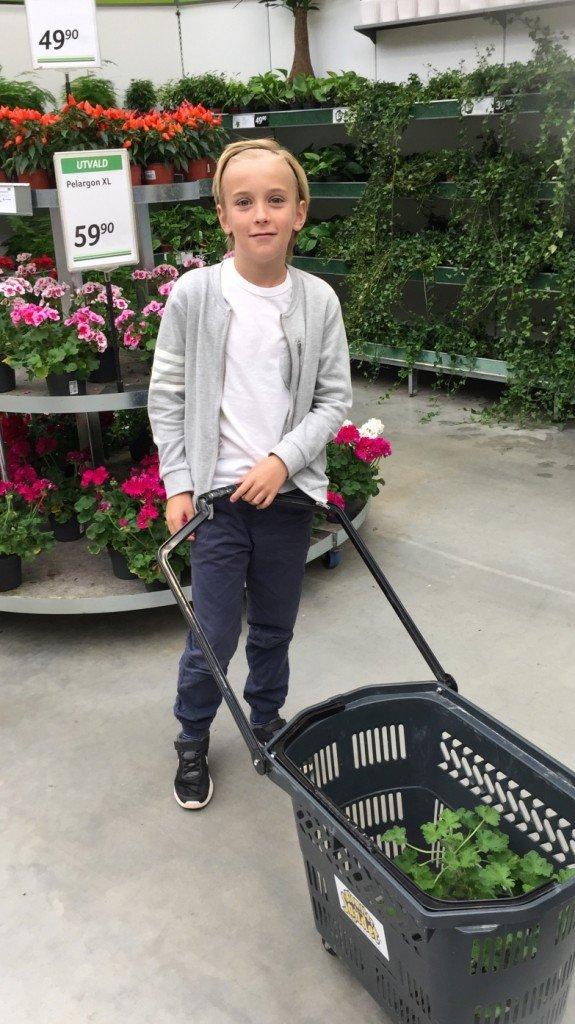 blomsterlandet_shopping_blommor_doktor_westerlund