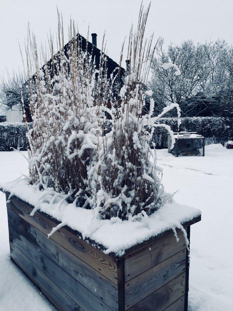 vinter_snofall_snow_prydnadsgras_odlingslada_av_trall_diy_aterbruk