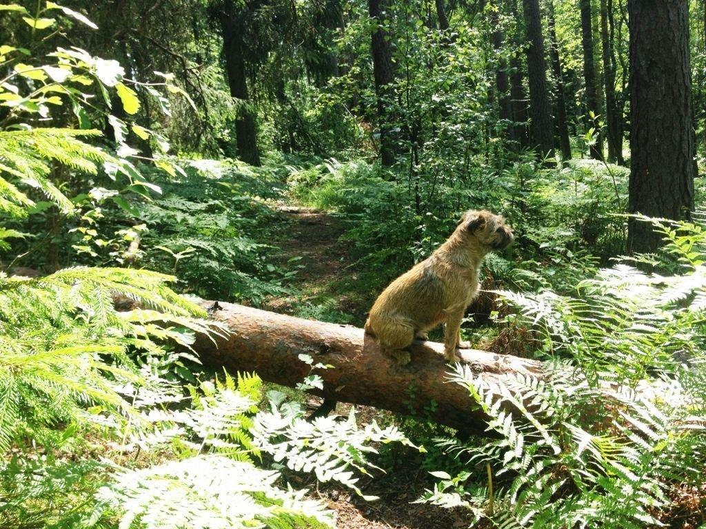 Puma får vackert posera under en av våra härliga skogspromenader. Just den här promenaden resulterade i att jag fick åka in till BB med förlossningsvärkar... Det är bra att röra på sig med andra ord!