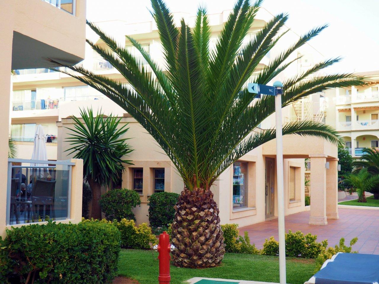 Mallorca_palmer_semester_livet