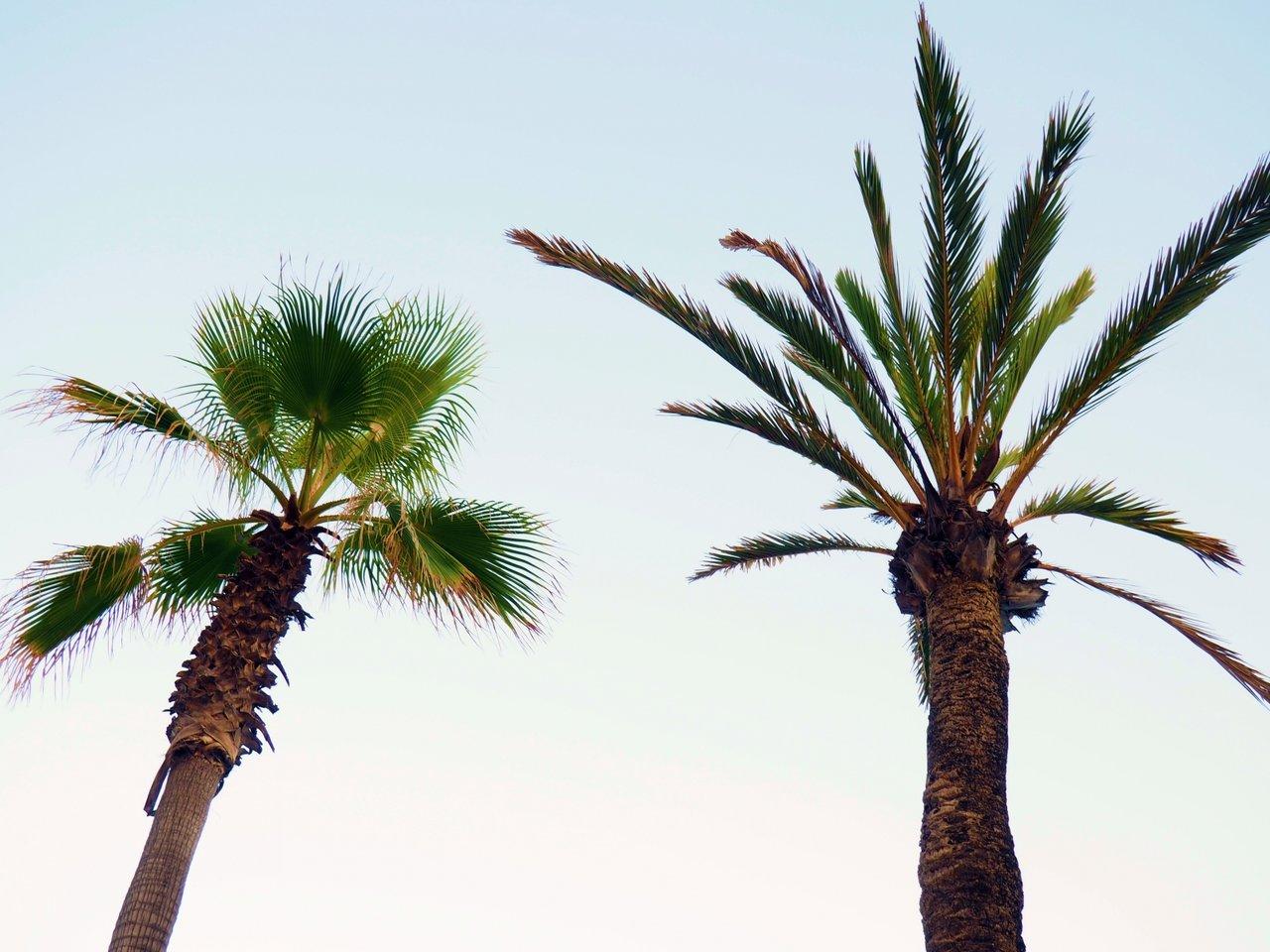 Palmerna_Mallorca_Semester_spanien_vackert