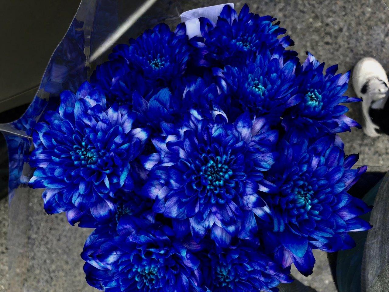 vackert_blommor_flowers