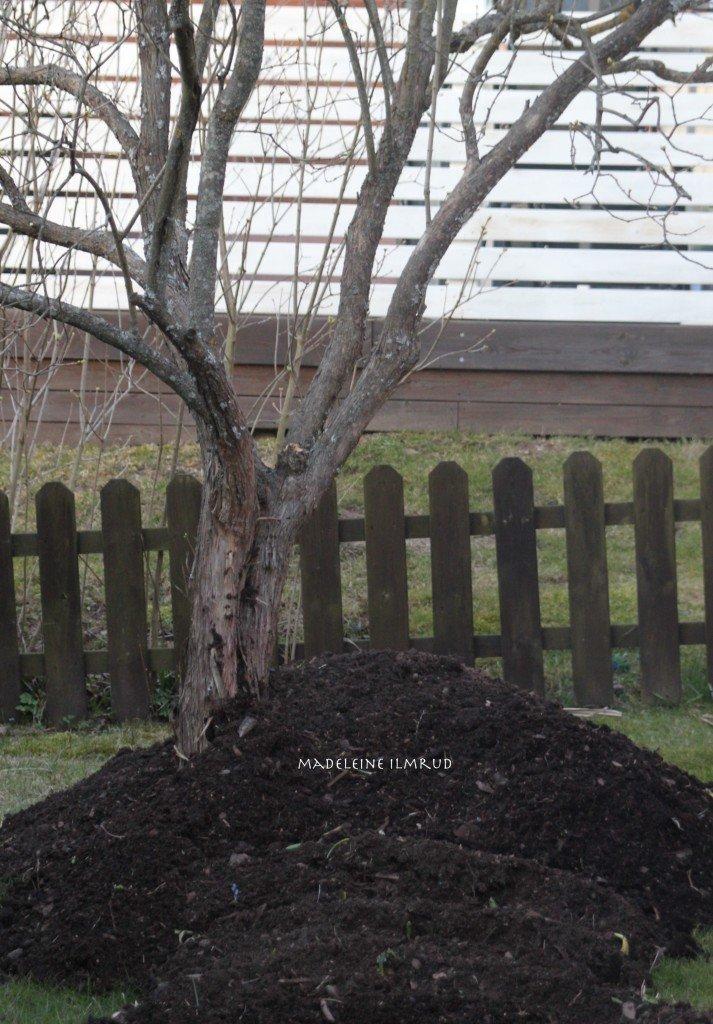 trädgård1