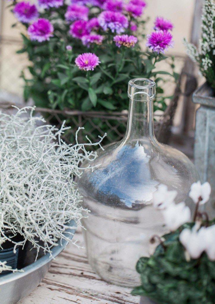 mys blommor, öland, handelsträdgård,