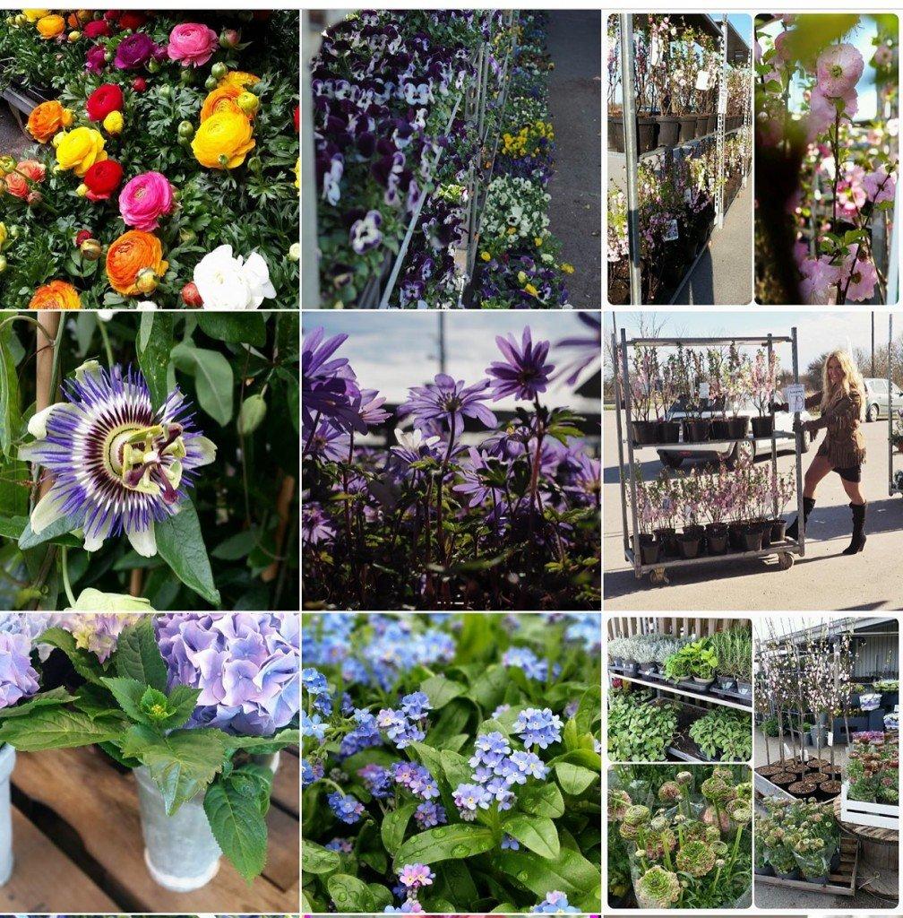mys blommor öland, mys blommor arontorp, mys blommor öppettider, mys blommor på öland, frontrops kroppkakor och mat, aromtorps kroppkakor, gillis dahlström, my martens, interflora ab, ensam mamma söker, öland, ölands spira, ölandsbladet, handelsträdgård på öland, garden center, plantagen, blomsterlandet,