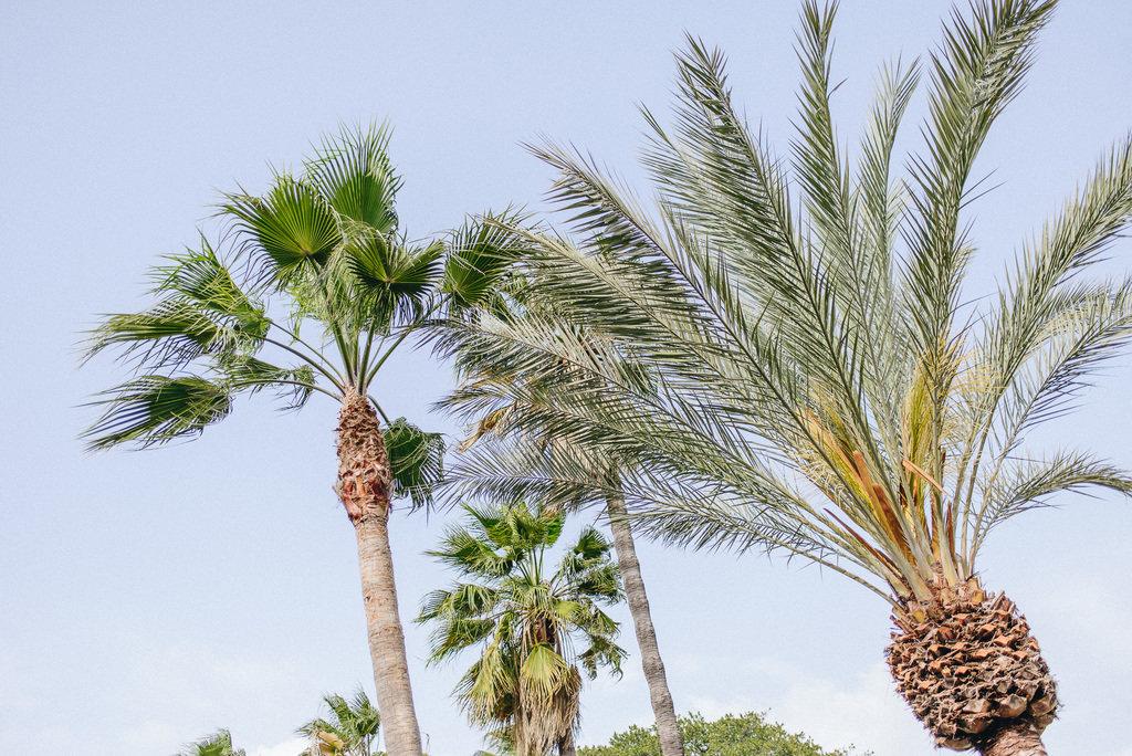 Michaela Deler cactus (1 av 1)-2