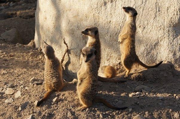 pornostjerne gravid zoo i Århus