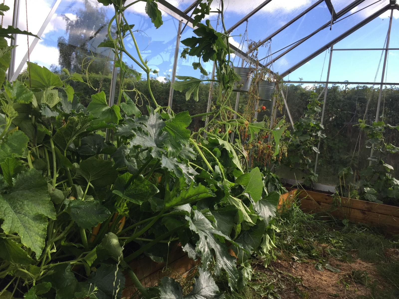 växthus odla