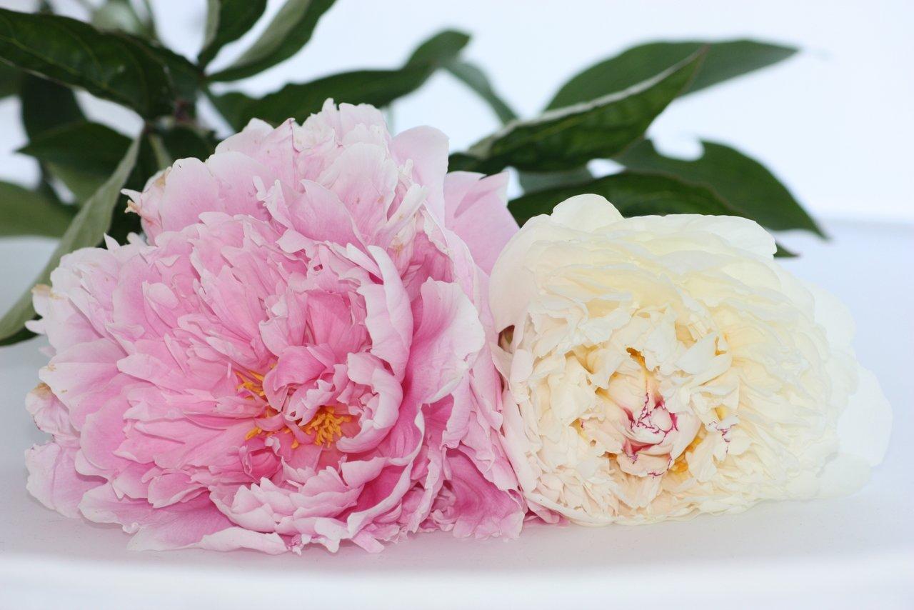 blommor bakgrundsbild