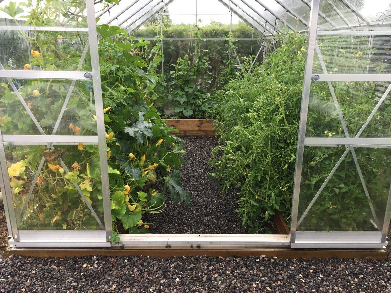 snyggt i växthuset