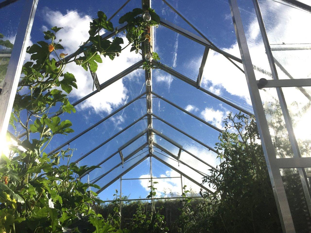 odla i växthus tips