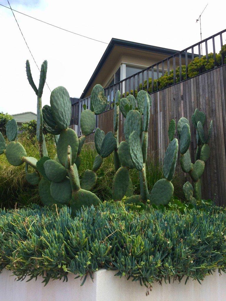 Jag älskar kaktusar!