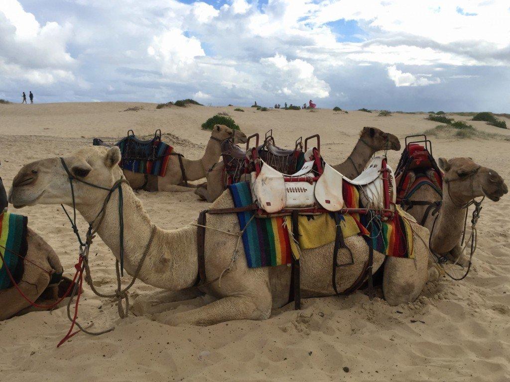Kineser och kameler.