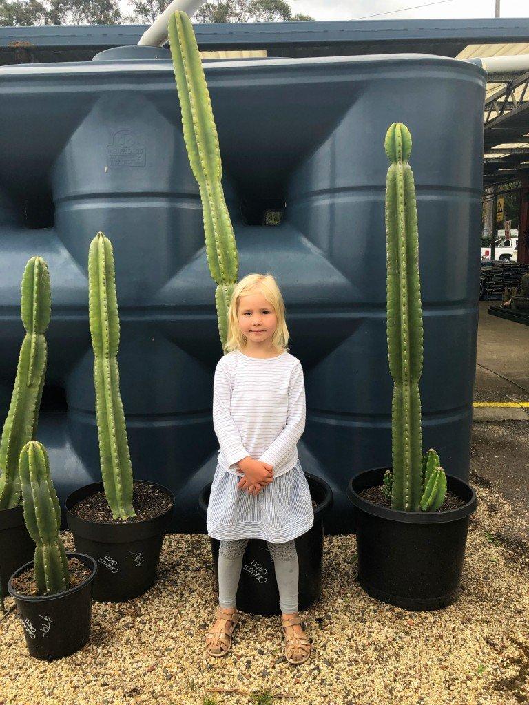 Har jag nämnt att jag älskar kaktusar? Funderar på att önska en sådan här läckerhet i födelsedagspresent i november.