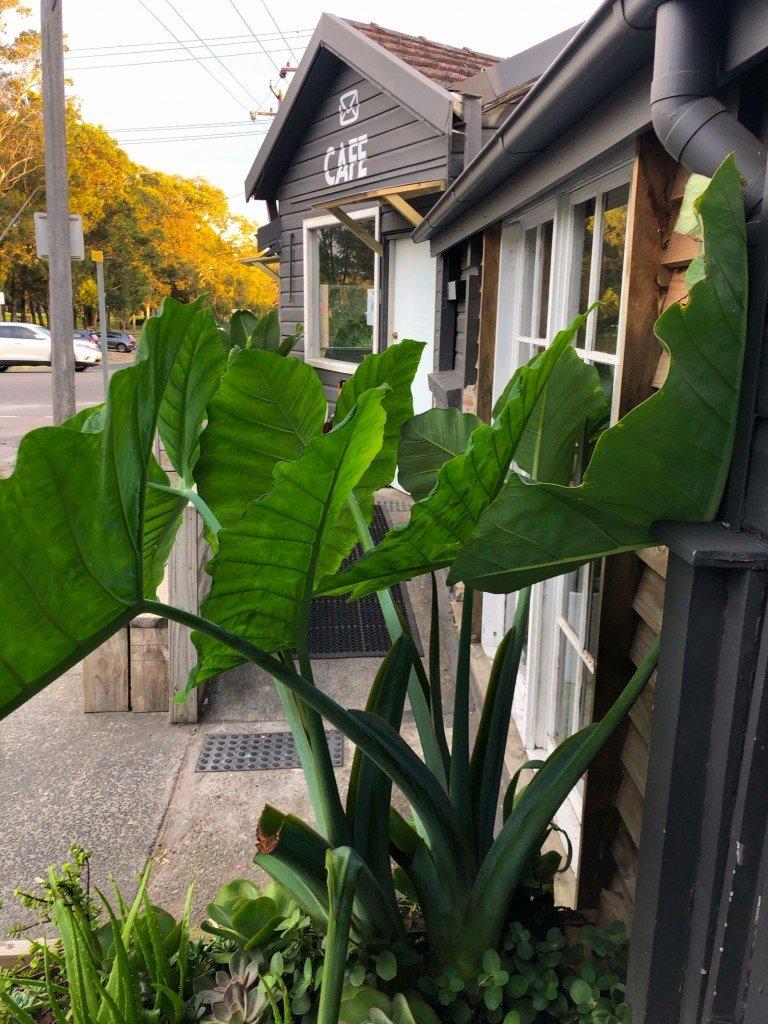 Vi har en växt med världens största blad precis utanför kontoret. Den är fin, men svår att komma förbi.