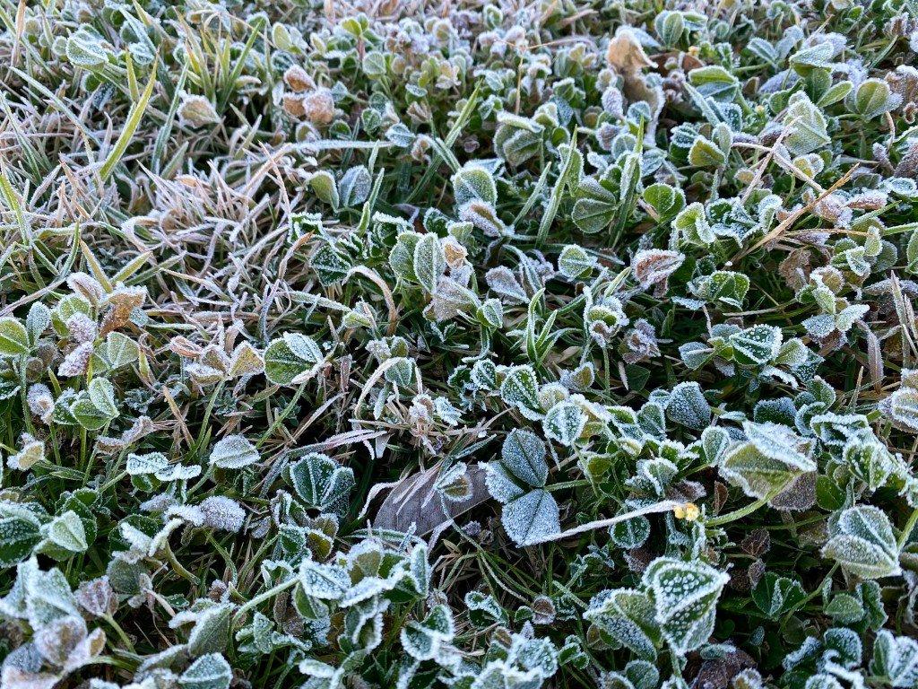 En vanlig syn hemma. Men jag kan inte komma ihåg att jag har sett frost på detta sätt här.