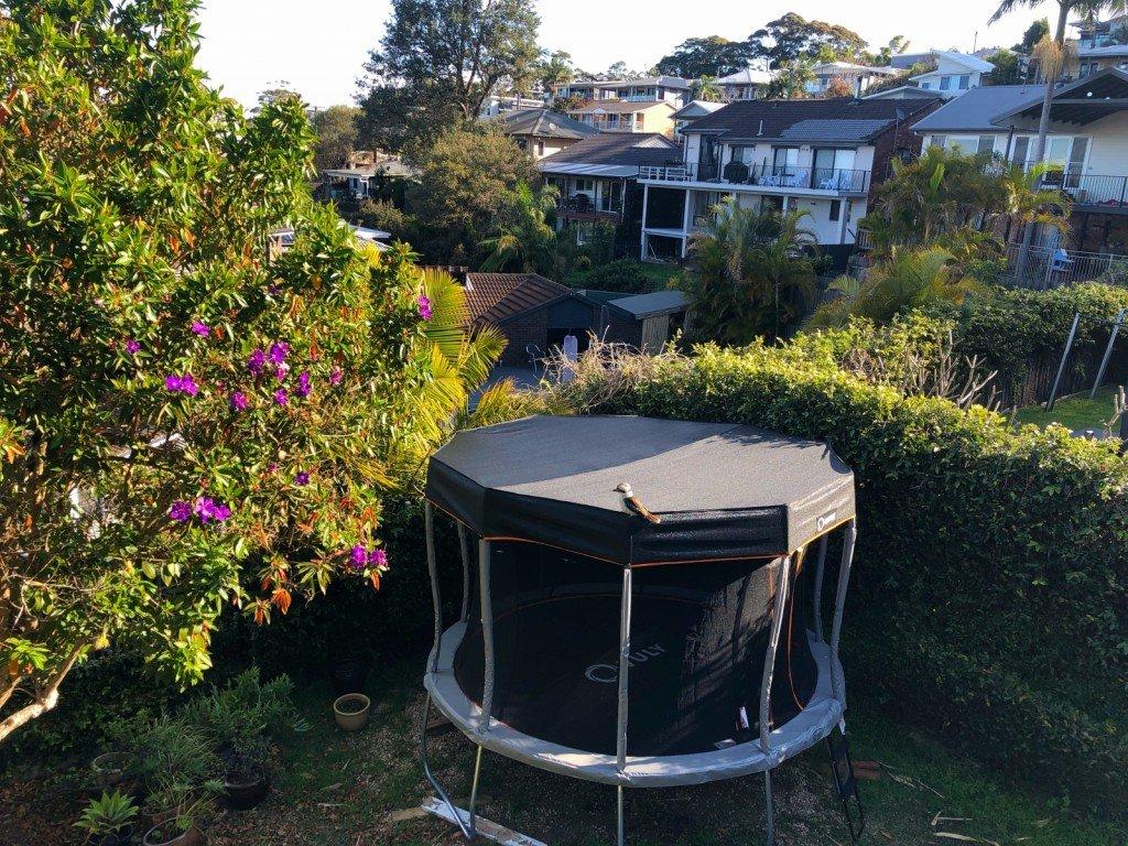 Vi fick besök av en liten kookaburra som satt på studsmattan och skrattade.