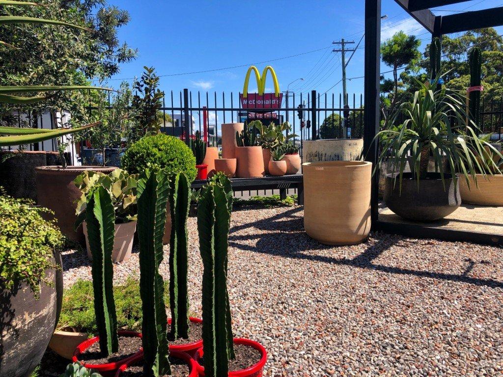 Vi åkte till den fantastiska blomsteraffär där jag köpte min kaktus för länge sedan. Idag blev det tre växter, men ingen kaktus.