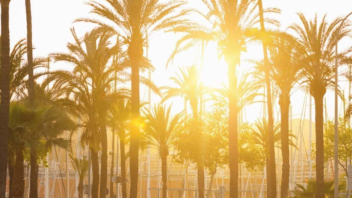 3600x2025_mallorca-palms