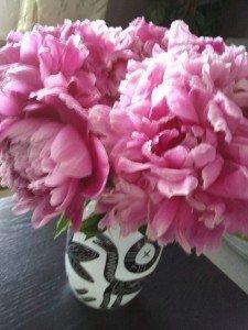 Nyplockade rosa doftpioner från trädgården.