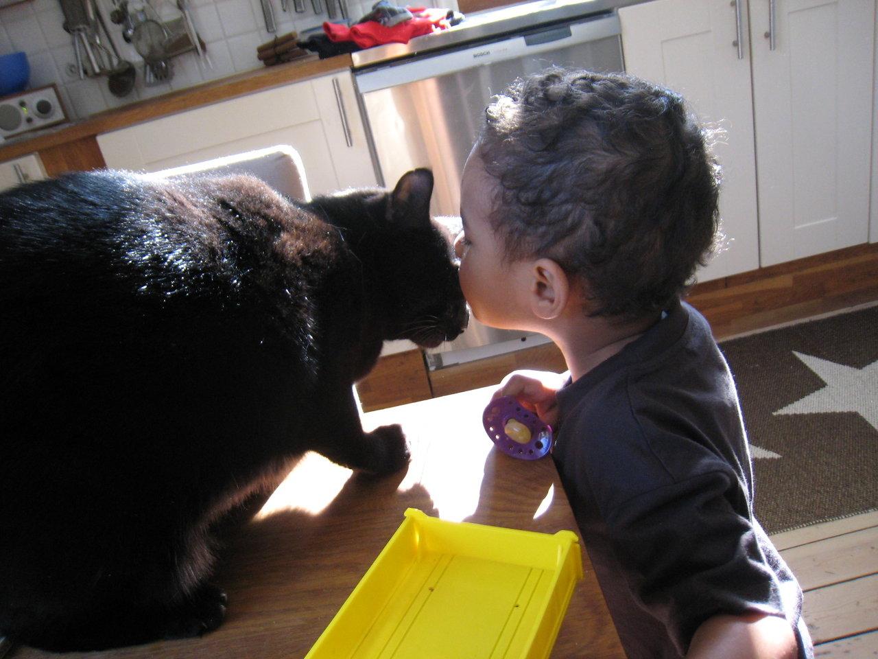 Lennox puss loppan